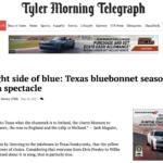 Tyler Morning Telegraph: Burnet County Blue Bonnets